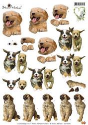 3D-kuva Martare valloittavan ihanat koirat