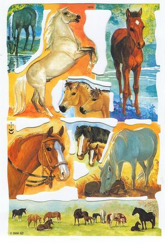 Kiiltokuvat hevoset 15x23cm