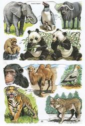 Kiiltokuvat eläimiä, pandat, apinat, norsu 15x23cm