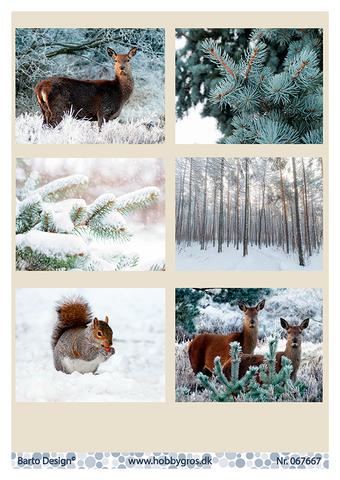 Talvikorttikuvat metsäneläimet ja maisemat 067667 BD