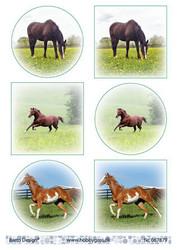 Korttikuvat hevoset bd 067879