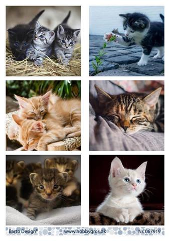 Barto Design korttikuvat kissat 067919