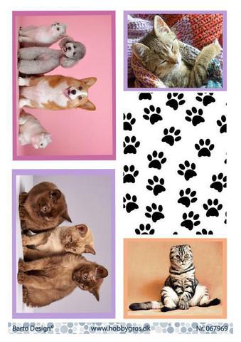 Barto Design korttikuvat kissat, koirat ja tassutausta a4