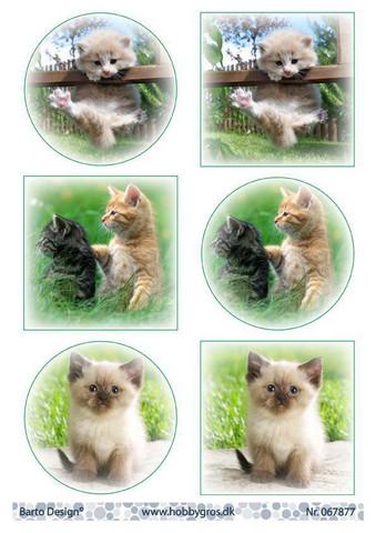 Barto Design korttikuvat kissanpennut a4