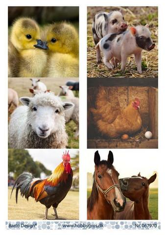 Barto Design korttikuvat maatilaneläimiä a4
