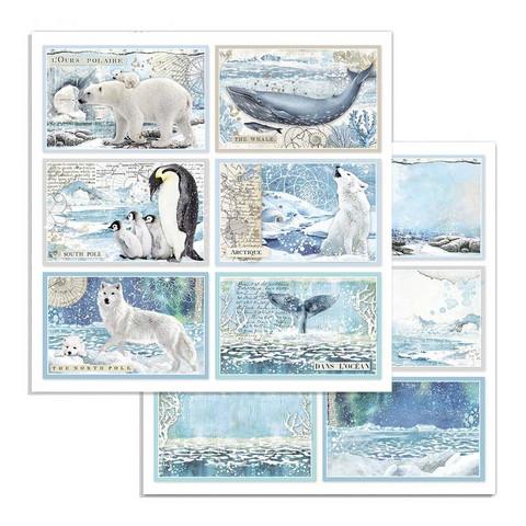 Stamperia korttikuvat Arctic Antarctic Cards 12x12