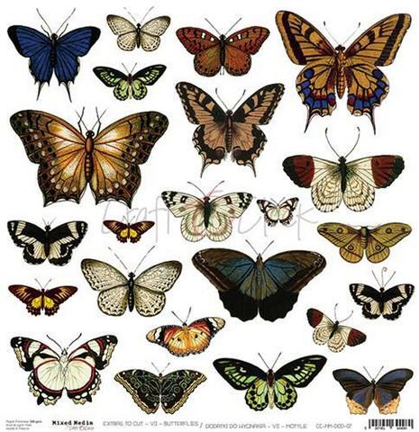 Craft O´Clock Mixed Media Butterflies Extras to cut 07 30,5x30,5cm