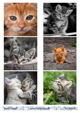 Barto Design korttikuvat kissanpennut 069030
