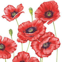 Servetti Poppies, 5 kpl