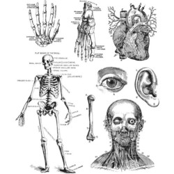 Stampers Anonymous, Tim Holtz leimasinsetti Cadaverous