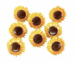 Haaraniitit Auringonkukka. 12 kpl