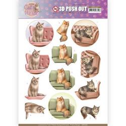 Amy Design Cat's World 3D-kuvat Show Cats
