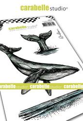 Carabelle Studio Le chant des baleines -leimasinsetti