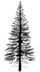 Lavinia Stamps leimasin Fir Tree 1