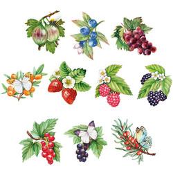 Valmiiksi leikattuja 3D kuvia, Berries