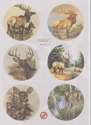 World of Craft korttikuvat 4, helmiäispaperi, leikattu