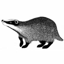 Lavinia Stamps leimasin Badger 2