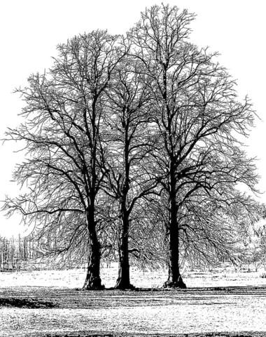 Crafty Individuals leimasin Tree Trio