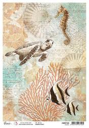 Ciao Bella riisipaperi Oceanic