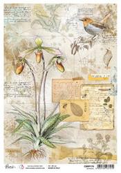 Ciao Bella riisipaperi Botanical