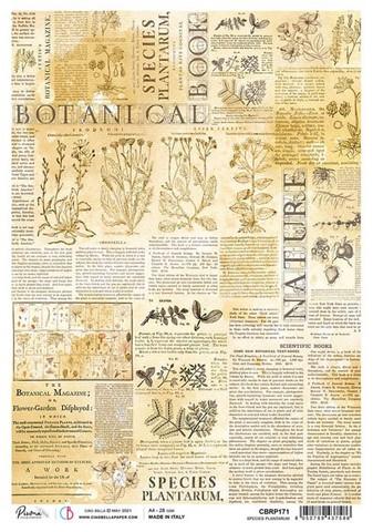 Ciao Bella riisipaperi Species Plantarium