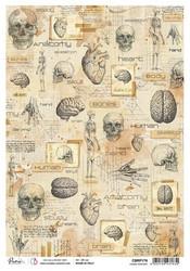 Ciao Bella riisipaperi Human Anatomy