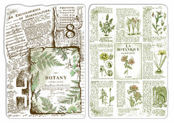 Ciao Bella leimasinsetti Botanical Horticulture