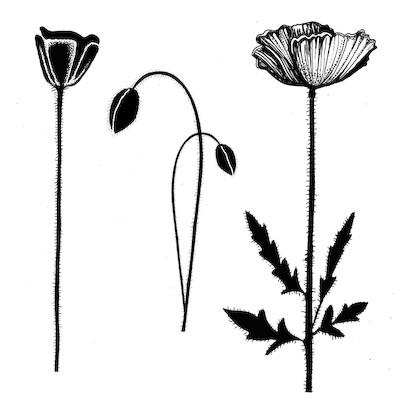 Lavinia Stamps leimasin Group Poppies