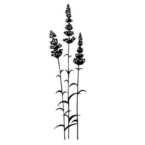 Lavinia Stamps leimasin Lavender