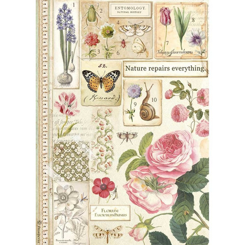 Stamperia riisipaperi Botany