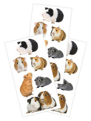 Paper House tarrat Guinea Pigs