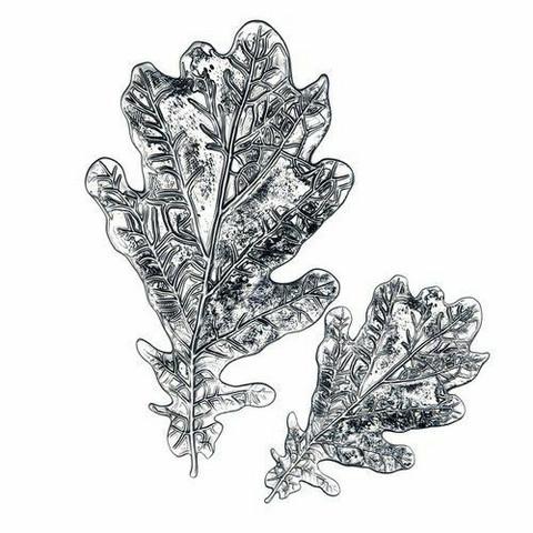 Sizzix Tim Holtz 3-D Impresslits stanssaava kohokuviointikansio Oak Leaf