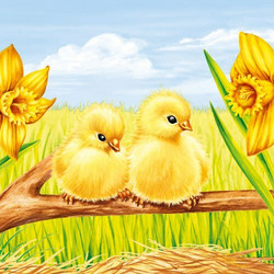Servetti Easter Starts, 20 kpl