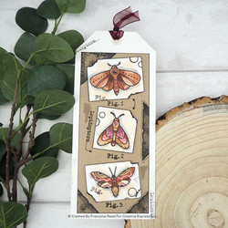 Woodware leimasinsetti Moths