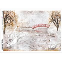 Ciao Bella riisipaperi Swan Lake