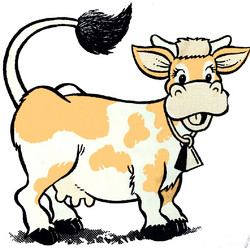 Lehmä – College S