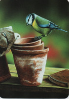 Blue tit and pots