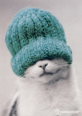 Cat with a beanie