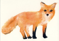 Outi Virtanen - Fox