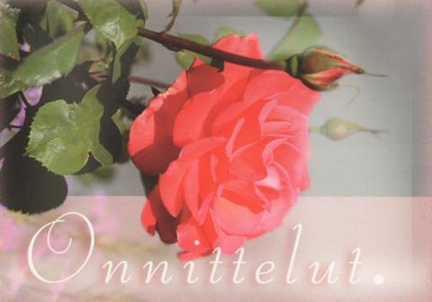 Onnittelut - ruusu