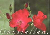 Congratulating - roses