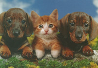 Dogs and a cat