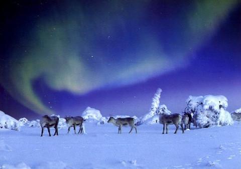 Aurora borealis #20