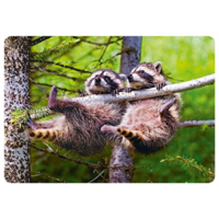 Raccoons hanging in a tree