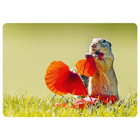 Squirrel and poppy