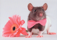 Mouse and flower