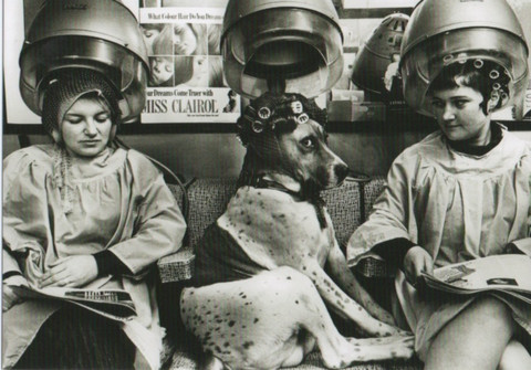 Dog in a hairdresser