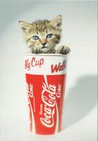 Coca-Cola kitten