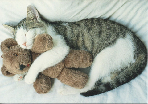Cat and teddy