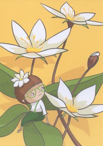 Satukortit - Starflower